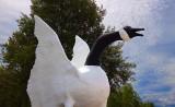 Wawa Goose 01598