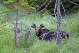 Curious Moose 02932