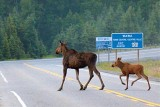 Road Hazard 02360