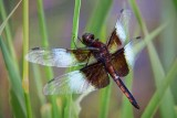 Dragonfly 20090804