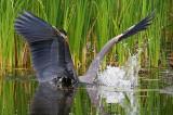 Heron Strike 50178