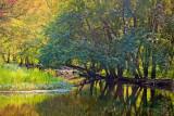 Salmon River 20090902