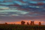Cornfield At Sunrise 20090915