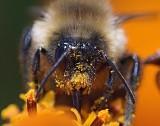 Pollen Face 51458