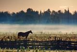 Horse & Mist 08004