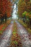 Autumn Farm Lane 20090928