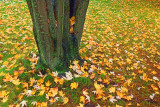 Autumn Ground Cover 20091009