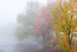 Autumn Trees In Fog 08591-2