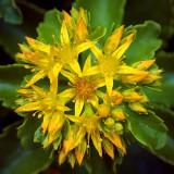 Complex Yellow Flower 53818