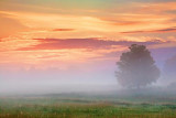 Sunrise Fog 20100712