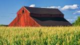 Barn & Corn 54200-1