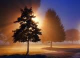 Trees In Fog 20100721