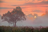 Tree In Foggy Sunrise 20100809