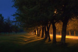 Tree-Lined Lane In First Light 20758-61