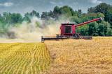 Harvesting A Field P1020644