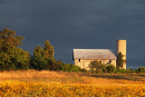 Barn At Sunset 21264