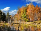 Autumn Marsh 22974