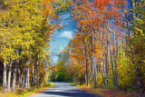 Autumn Backroad 22962-3