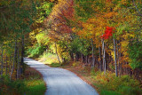 Autumn Backroad 20100926