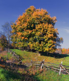 Autumn Trees 23248-9