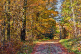 Autumn Backroad 23259