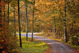 Autumn Backroad 22861