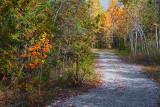 Cedar Grove Trail 23483