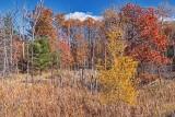 Autumn Landscape 24188