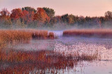 Misty Marsh At Sunrise 23893