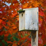Autumn Bird Box 00014