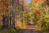 Autumn Backroad 23262