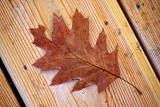 Fallen Leaf 01845-6