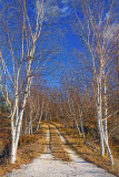 Birch Lane 02027