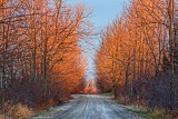 Late Autumn Backroad 20101204