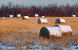 Snow-capped Bales 20101215
