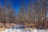 Winterscape 04532