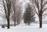 Cemetery Snowfall 20110115
