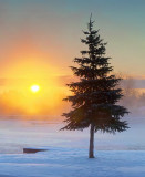 Sunrise Pine 20110120