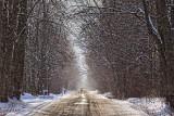 Winter Backroad 20110121