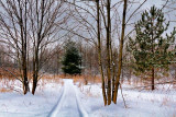 Snowy Trail 20110207