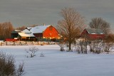 Red Barns At Sunrise 05606