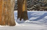 Two Big Ol' Trees 05674B