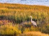 Birds of Prince Edward Island