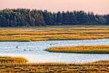 PEI Marsh At Sunrise 27868