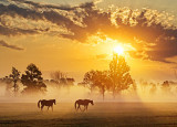Two Horses In Misty Sunrise 20120917