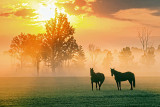 Two Horses In Misty Sunrise 28026