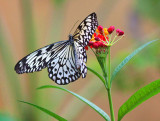 Butterfly On A Flower 28087
