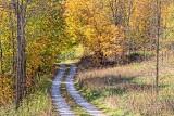 Autumn Lane 28324