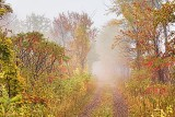 Autumn Trail In Fog 28507