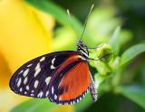 Butterfly 28168-9